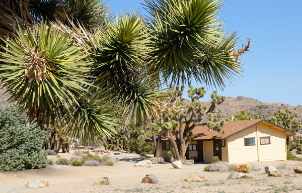 Joshua-Tree-Nationalpark 01